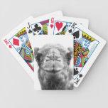 El camello besa la foto del primer de la diversión baraja de cartas