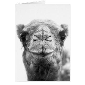 El camello besa tarjetas de felicitación de la