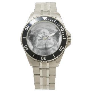 El camello blanco y negro besa el reloj para