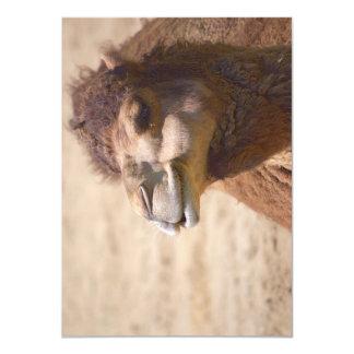 El camello del dromedario - invitación