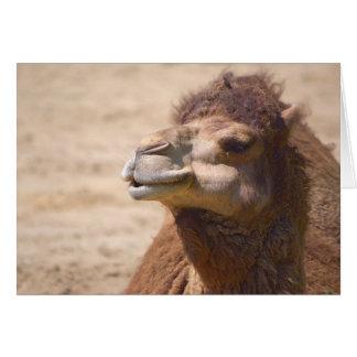 El camello del dromedario - tarjeta