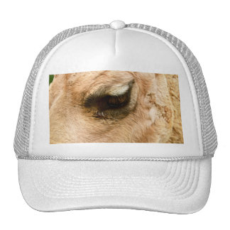 El camello del primer observa la foto de la natura gorro de camionero