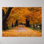 El caminar abajo del tiempo pasado del otoño poster
