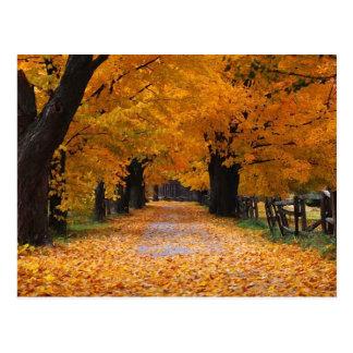 El caminar abajo del tiempo pasado del otoño postal