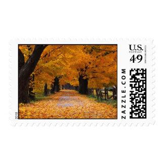 El caminar abajo del tiempo pasado del otoño sello