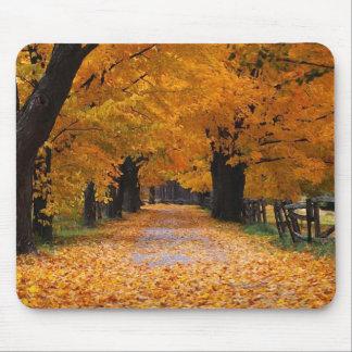 El caminar abajo del tiempo pasado del otoño tapetes de raton