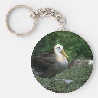 El caminar agitado del albatros llaveros