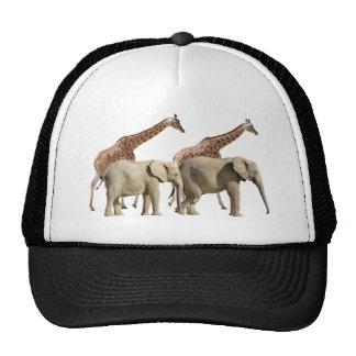 El caminar aislado de las jirafas y de los elefant gorros