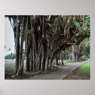 El CAMINAR DEBAJO DE LOS BANIANOS en HAWAII Impresiones