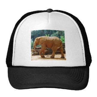 El caminar del elefante africano gorra