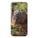 El caminar del Emu iPhone 5 Cobertura