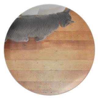 El caminar del gato plato de cena