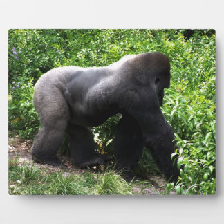El caminar del gorila del Silverback sideway Placas