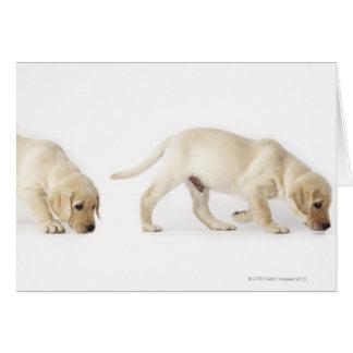 El caminar del perrito del labrador retriever tarjeta de felicitación