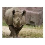 el caminar del rinoceronte postales