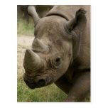 el caminar del rinoceronte tarjeta postal