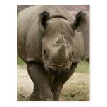 el caminar del rinoceronte tarjetas postales