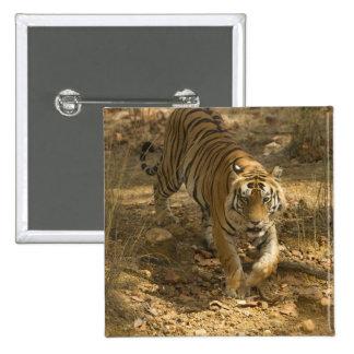 El caminar del tigre de Bengala Pin Cuadrado