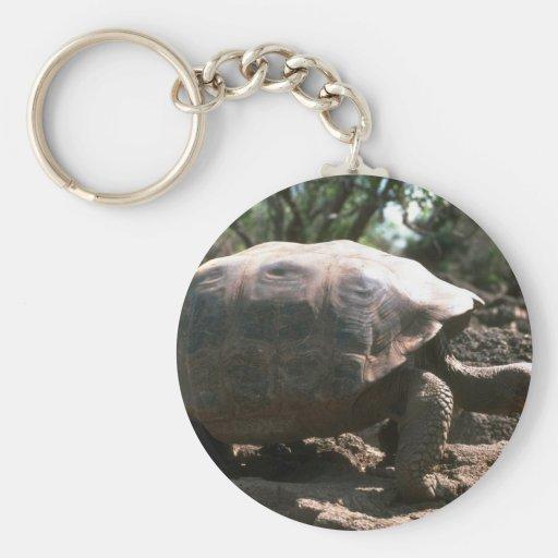 El caminar en forma de cúpula gigante de la tortug llavero