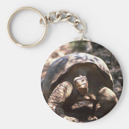 El caminar en forma de cúpula gigante de la tortug llavero redondo tipo pin