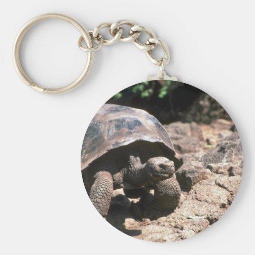 El caminar en forma de cúpula gigante de la tortug llaveros