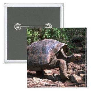 El caminar en forma de cúpula gigante de la tortug pin