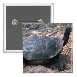 El caminar en forma de cúpula gigante de la tortug pins