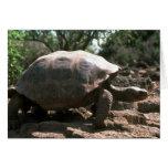 El caminar en forma de cúpula gigante de la tortug tarjeta