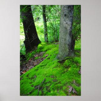 El caminar en las maderas de Nimisilla con los árb Impresiones