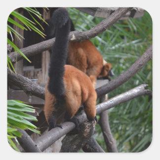 El caminar hinchado rojo del extremo del Lemur Pegatinas Cuadradas