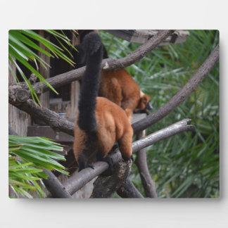 El caminar hinchado rojo del extremo del Lemur Placa De Madera