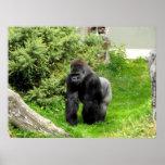 El caminar masculino del nudillo del gorila del si impresiones
