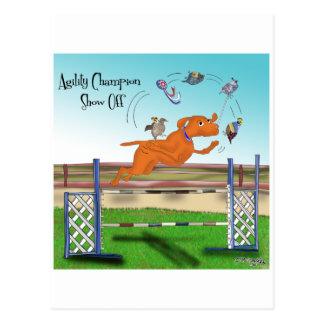El campeón de la agilidad muestra apagado tarjetas postales