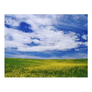 El campo de Canola o de la mostaza florece, Postal