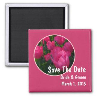 El campo rosado de tulipanes ahorra el imán de la
