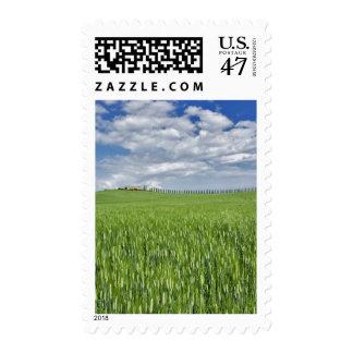 El campo y la impulsión de trigo alinearon por el sello