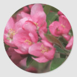 El cangrejo Apple florece Pegatina Redonda