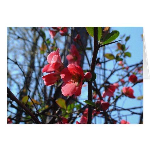El cangrejo Apple florece Tarjeta De Felicitación