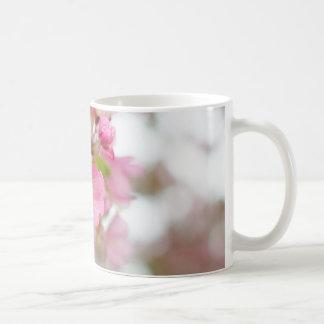 El cangrejo Apple rosado hermoso florece taza de