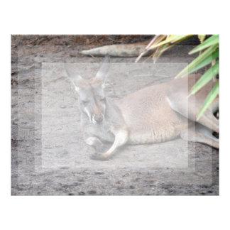 el canguro que se acuesta observa el animal plantillas de membrete