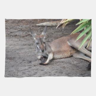 el canguro que se acuesta observa el animal toallas