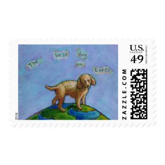 El caniche es el mejor perro en la pintura linda envio