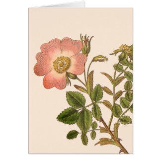 El canina de Rosa, rosa de perro, floral elegante Tarjeta Pequeña