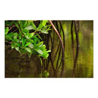El Canoeing a través de mangles reservados Cojinete