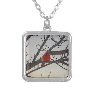 El cardenal por la mañana colgante cuadrado