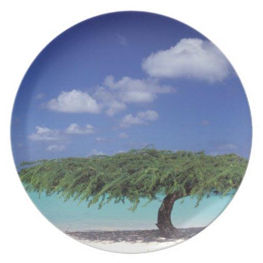 El Caribe, Aruba. Playa de Eagle Platos