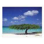 El Caribe, Aruba. Playa de Eagle Postal