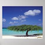 El Caribe, Aruba. Playa de Eagle Póster