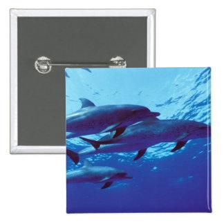 El Caribe Bahamas manchó delfínes Pins