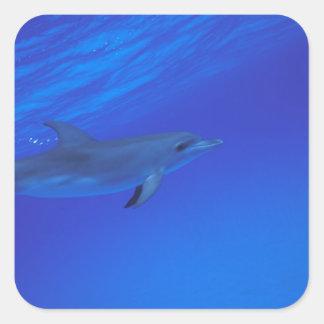 El Caribe Bahamas manchó el delfín Calcomanía Cuadradas Personalizadas